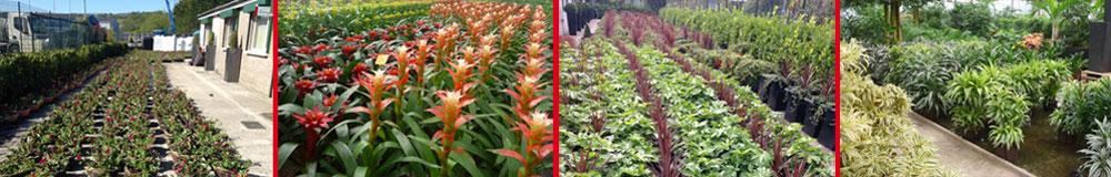 Indoor and Outdoor Plant Displays