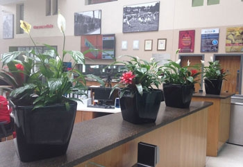 office plant displays. Wonderful Office Office Plant Displays And